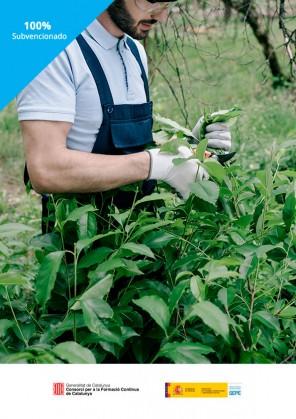 Certificado de Actividades Auxiliares en Viveros, jardines y Centros de Jardinería